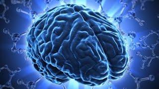 The Human Brain Amazing Documentary HD 2015
