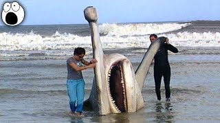 Top 10 GIANT Creatures That Have Ever Been Caught