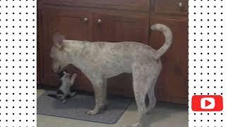 Dog vs Cat Fight   Cat and Dog Funny Fight Compilation Viral TRND Videos
