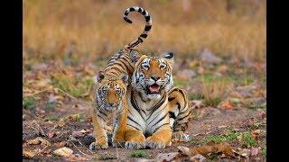 Thế giới động vật 🐩 các loài động vật quanh ta trong rừng các con vật | VNTV