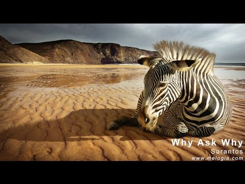 Sarantos - Why Ask Why