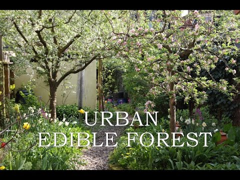 Edible Urban Garden
