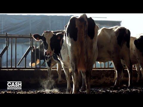 Nouvel Ordre Mondial - Produits laitiers : où va l'argent du beurre ?  - Cash investigation (Teaser)