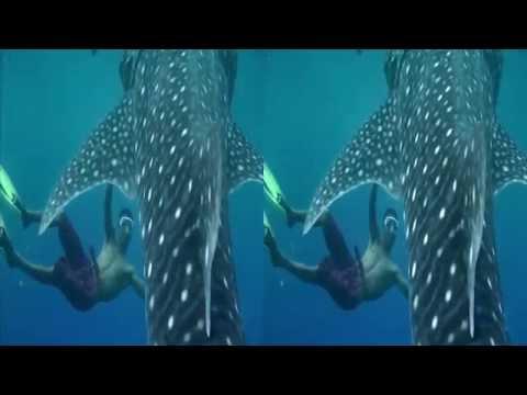 [Korea3DShowcase2012] 고래상어의 꿈 3D by Monster Republic