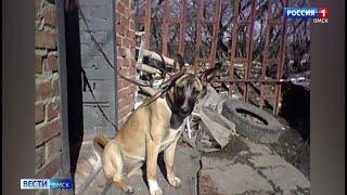 В Омске вынесли приговор живодёру, укравшему и съевшему собаку