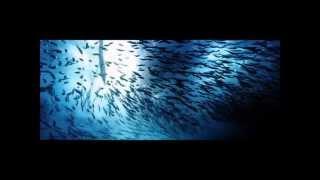 Ocean Pollution - Save Our Marine Life