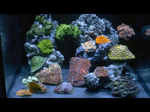 vlog 30: 40 gal LPS Reef Tank