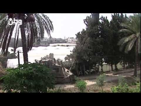 بسبب العدوان وغياب القوانين.. الحياة البرية في غزة مهددة بالاندثار
