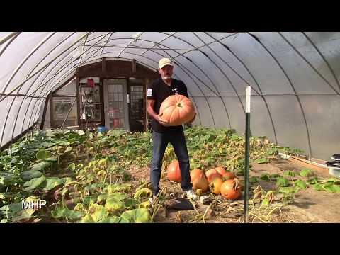 My Biggest Pumpkin Ever - Hydroponic Finale