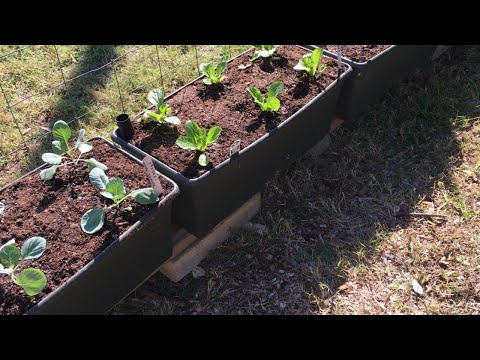 HUGE EARTHBOX PLANTING FOR FALL