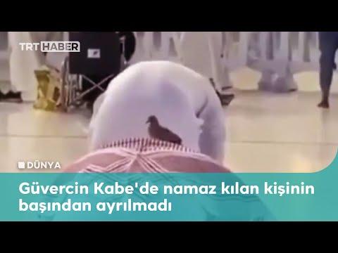 Güvercin Kabe'de namaz kılan kişinin başından ayrılmadı