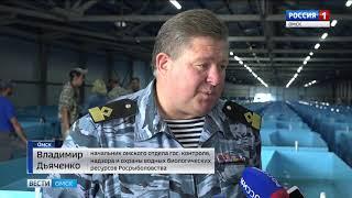 9000 мальков сибирского осетра выпустили сегодня в Иртыш