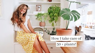 MY WAY TOO BIG PLANT COLLECTION (over 50 plants)