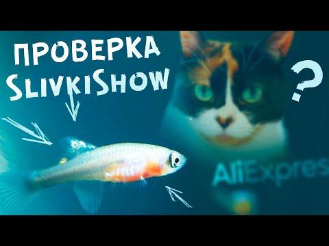 Проверка Slivki Show! Живые рыбки с AliExpress! Это реально работает??