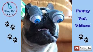 Funny Dog Videos for Kids ✅ Funny and Cute Dog Videos For Kids Compilation video HD ##03