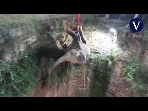 Espectacular rescate de un elefante atrapado en un pozo