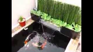 Mini Koi Pond On Rooftop 1