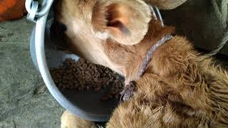 Cute cow feed food