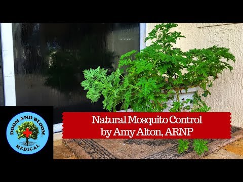 Natural Ways to Protect Your Home from Mosquitoes
