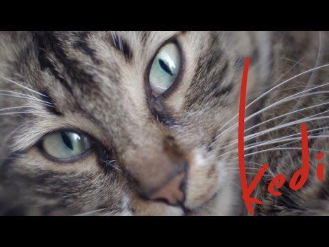 Kedi - Official U.S. Trailer - Oscilloscope Laboratories