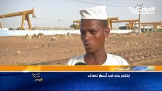 أسعار الخراف تحلّق في السودان     -