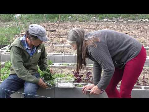 Adventures in High Performance Gardening | Week 8