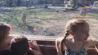 FORGET CATS! Funny KIDS vs ZOO ANIMALS are WAY FUN
