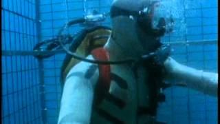 ヨシキリザメによる咬傷実験
