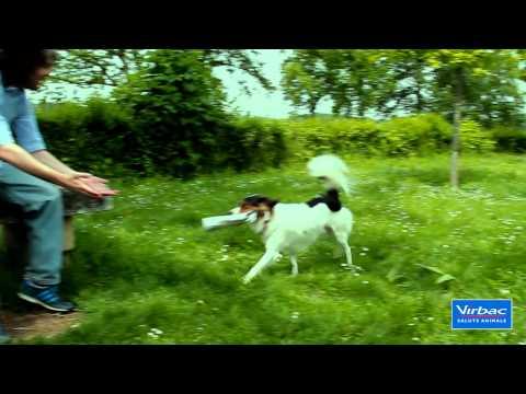 Spot contro la leishmaniosi canina