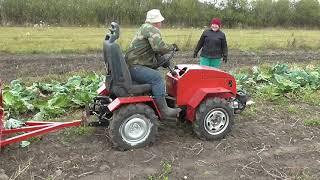 Минитрактор - переломка.Уборка капусты. Minitractor-fracture.Cabbage harvesting