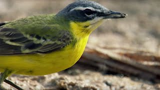Swallows in Deadly Oasis In The Sahara Desert | Africa | BBC