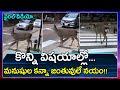Animal crossing road using civic sense, video goes viral on social media