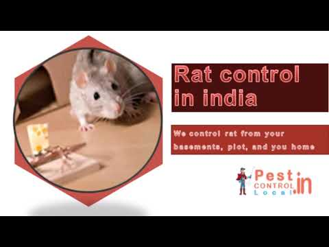 bed bug control in India