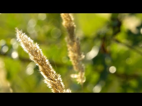 Morning Relaxing Music - Light Piano Music, Study Music, Stress Relief (Trinity)