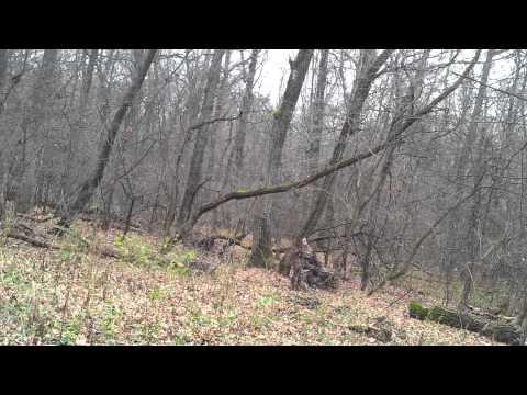 Записки великого охотника