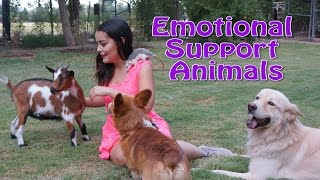 How to Make Your Pet an Emotional Support Animal