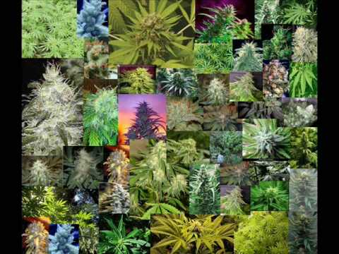 Cypress Hill & Sonic Youth - Mary Jane