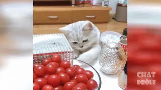 Funny Cats | Cute Kittens | Cats vs Kittens