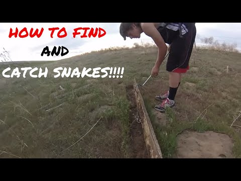 How to make a snake trap musica movil musicamoviles com