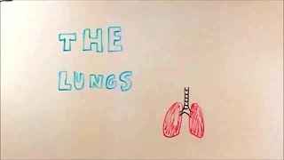 What are the lungs? Where are they and what do they do? Our students investigate.