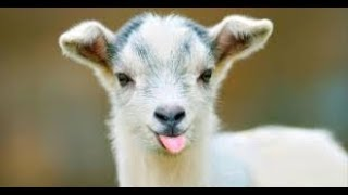 🐶 🐱Funny and Cute Animal Videos Compilation 2018   funny animal clips 🐶 🐱