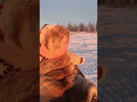 Ребенок оленеводов на прогулке