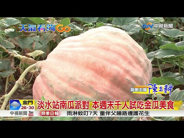全國大南瓜PK賽 淡水瓜農有機會破千台斤