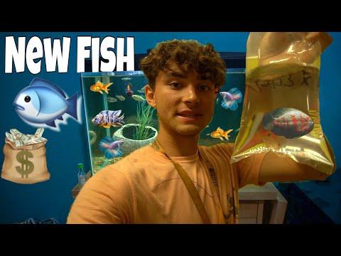 We GOT MORE FISH!
