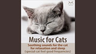 Classical Music for the Relaxed Cat and Mistress: Largo by Joh. S. Bach with Light Stream Noise