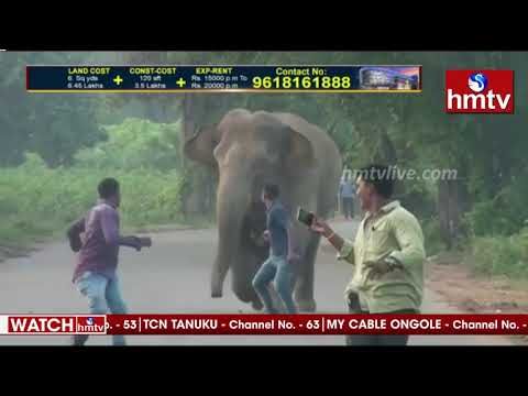 Angry elephants chase a group of men in Andhra Pradesh, viral video