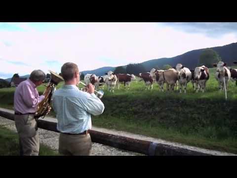 Для французских коров устроили джазовый концерт