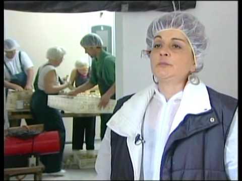 Prilog o vestackom osemenjavanju curaka u Backoj Topoli