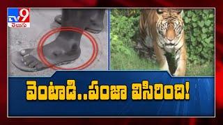 Tiger attacks two men in Telangana..
