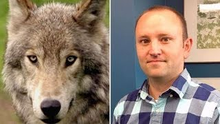 Man saves campers from wolf attack in Banff